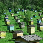 Organization own apiary