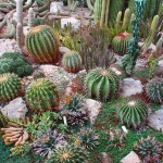 Cultivation and sale of cactuses