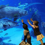 Business on production of aquariums